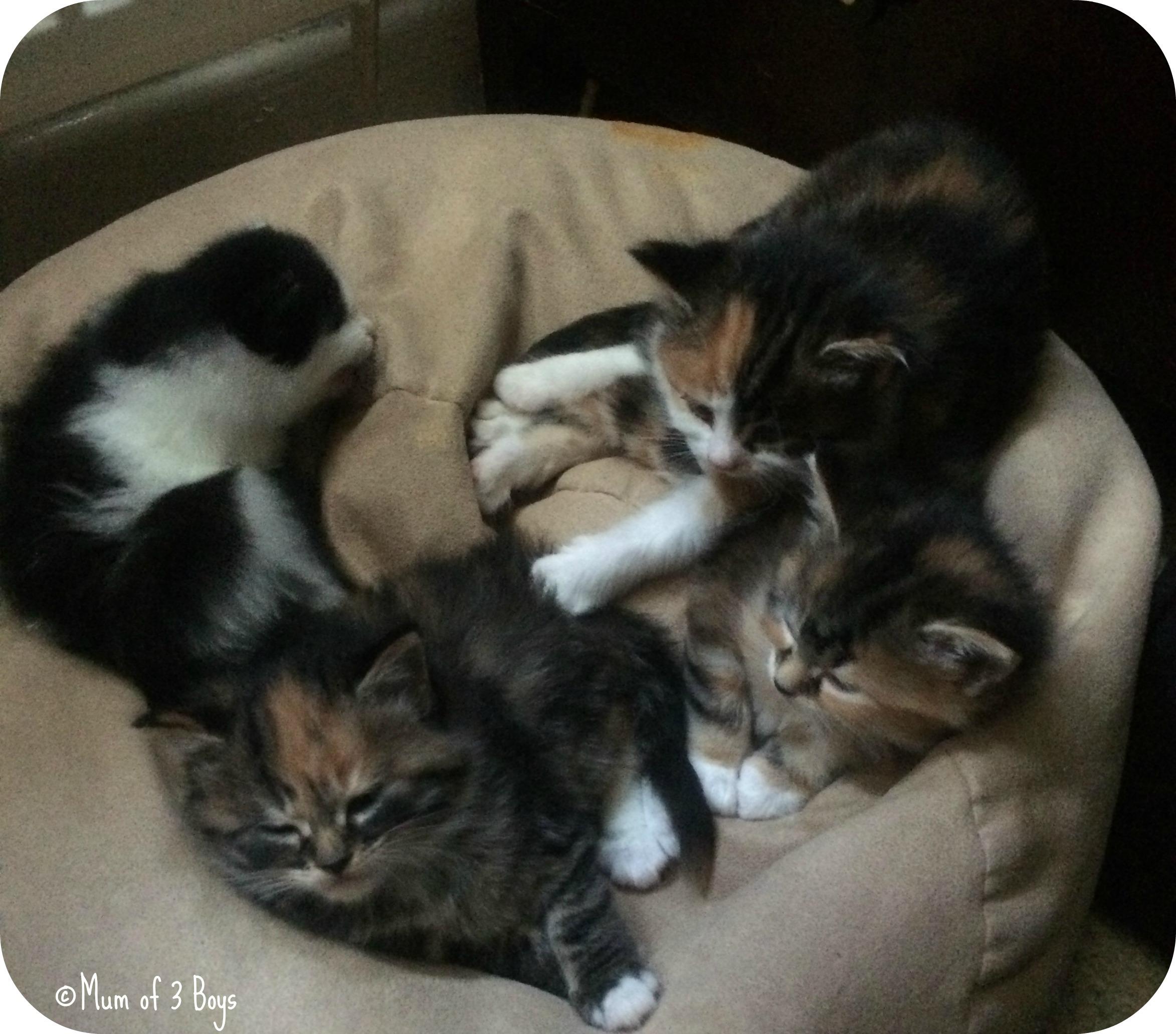 kittens sunday photo