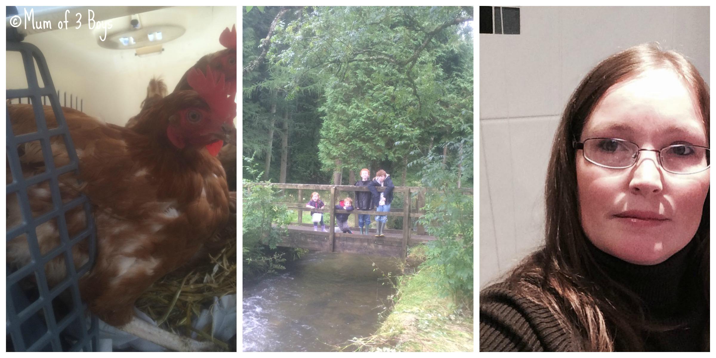 hen,me,family