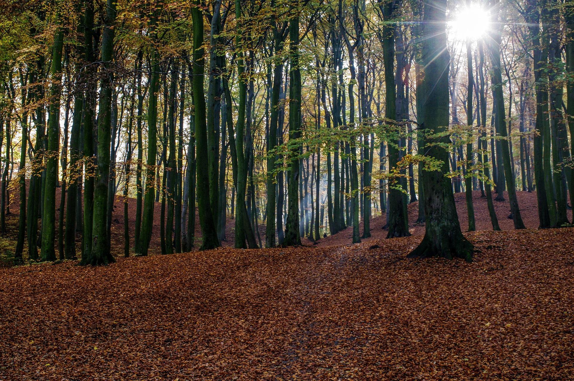 trees-1030981_1920